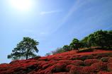 春のひと時~萩の茶屋