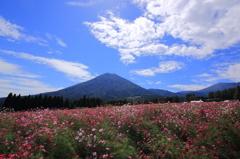 生駒高原の光