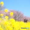 春  実感