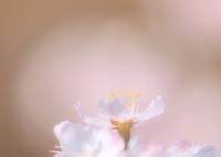 OLYMPUS E-M1で撮影した(花精おどる)の写真(画像)