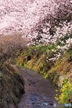 春めく小川