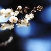 光の春を感じたい
