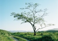 MAMIYA RB67 PROFESSIONAL SDで撮影した(tree)の写真(画像)