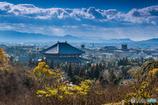 奈良公園秋景Ⅱ