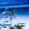 rain (ain't) drop(ped)