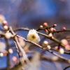 春待ち、綻ぶ