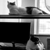 窓辺の二匹。