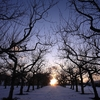 冬の果樹園