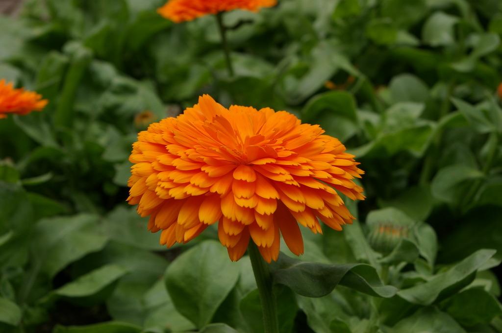 花の名は・・・