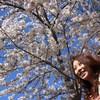 桜 メイン