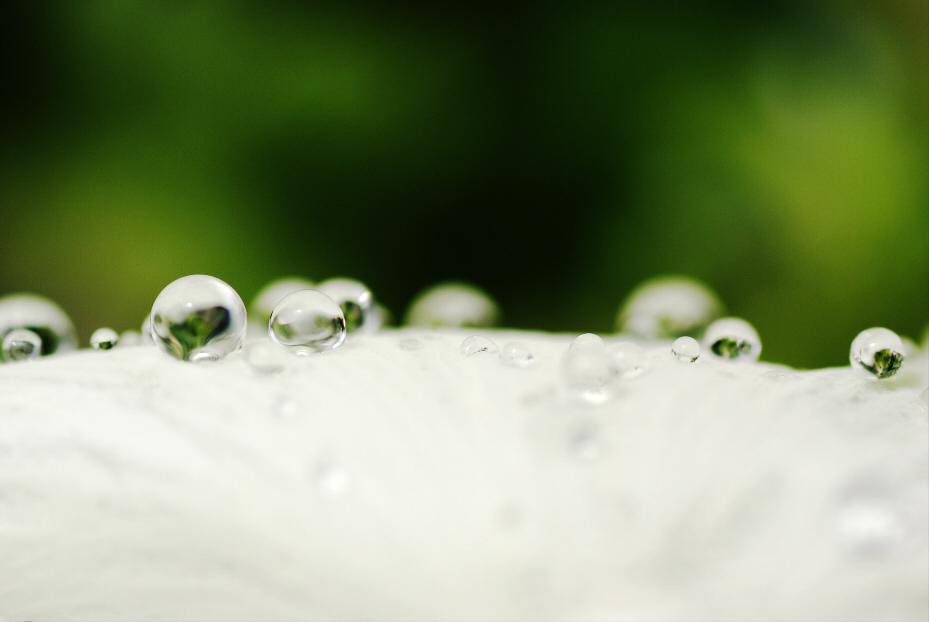 花びらの上の水玉 2