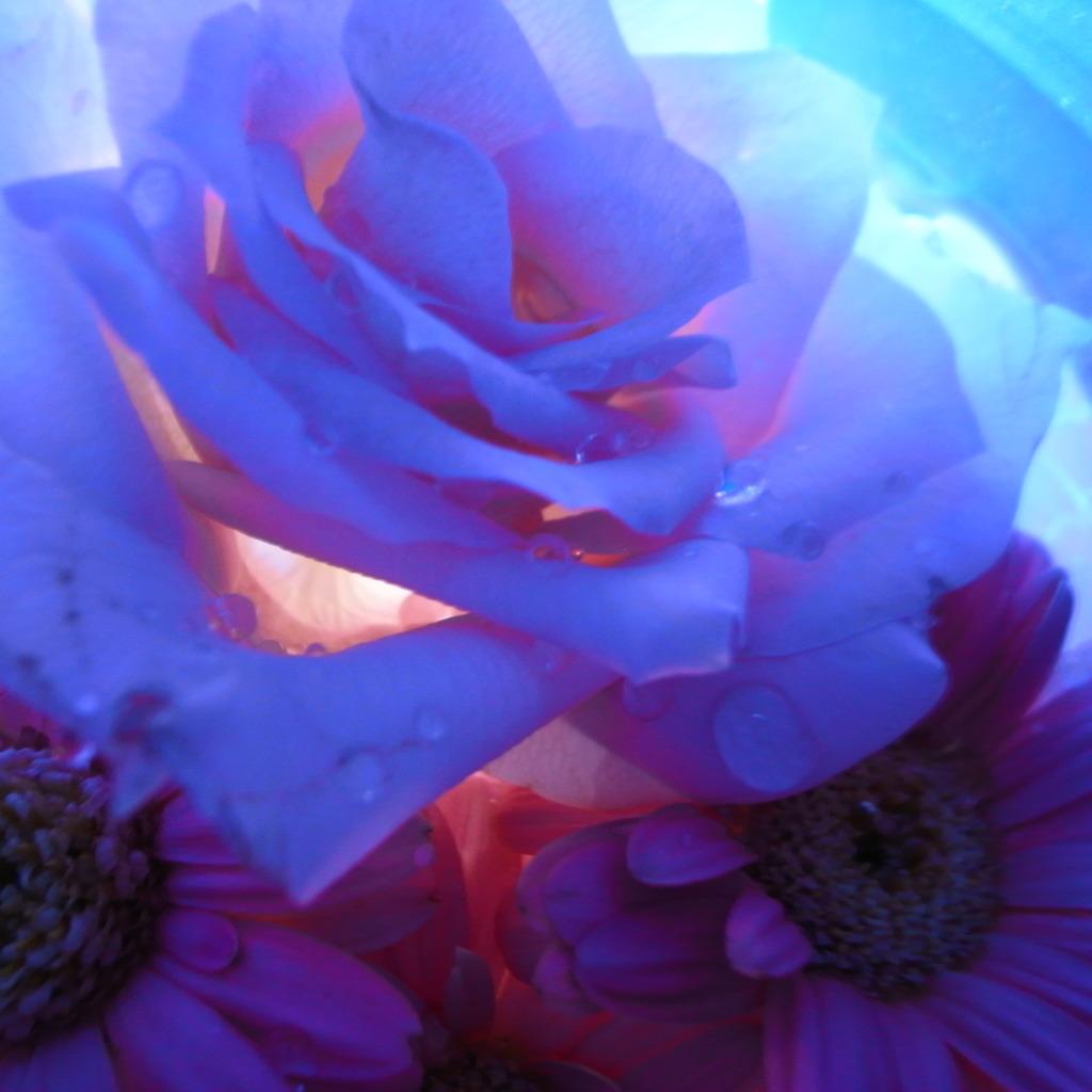 blue white pink