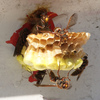 ハチの巣、作り始め(トリミングver)
