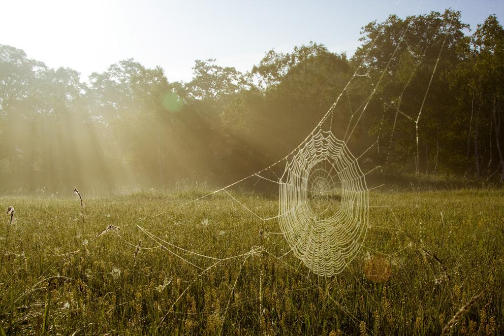 朝霧の逆光の蜘蛛の巣