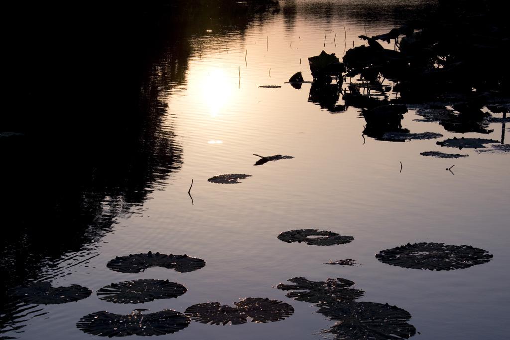 蓮 坂田ヶ池