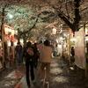 平野神社の夜桜