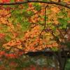 秋の光に照らされて