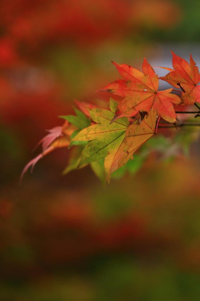 紅葉に囲まれて