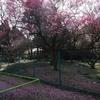 梅香る公園