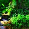 和風庭園ジオラマ