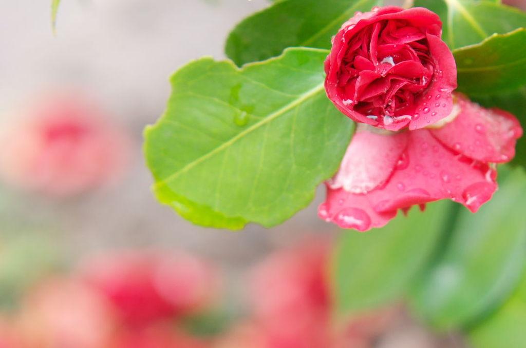 春雨にぬれて・・