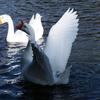 水鳥(5)