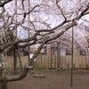 樹齢400年(5)