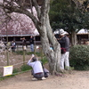 樹齢400年(4)