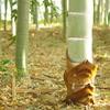 新年の竹林