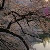 北の丸公園武道館入り口2-0904