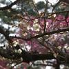 栗林公園0902-4