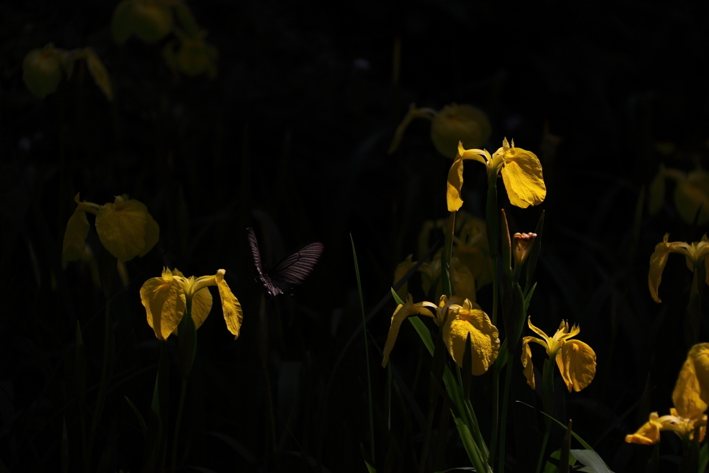花から花へ
