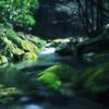 The murmur of a creek