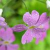 雨上がりの花たち 4