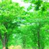 いきいき森
