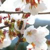 春活動開始