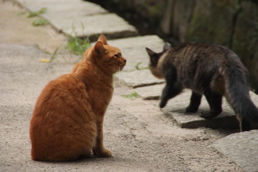 Cat in the Shrine