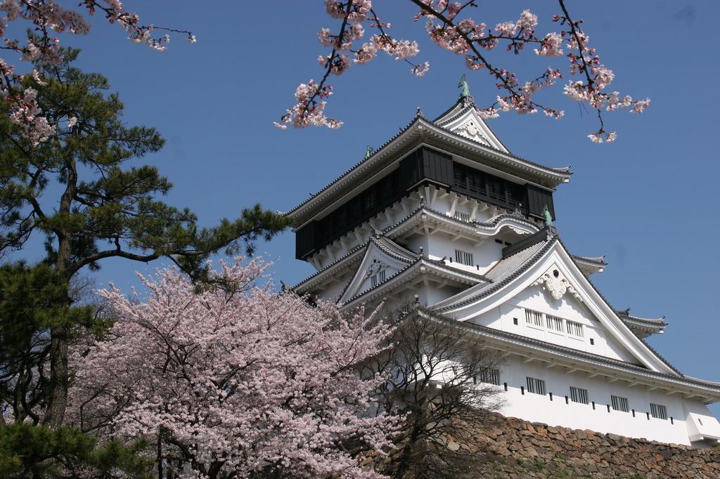 桜の小倉城