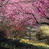 SakuraSuisen
