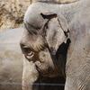 ゾウの哀愁
