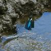 増水後の翡翠ポイント 2
