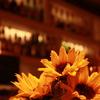 バーの向日葵