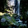 桑の木 滝