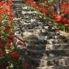 寺院への石段