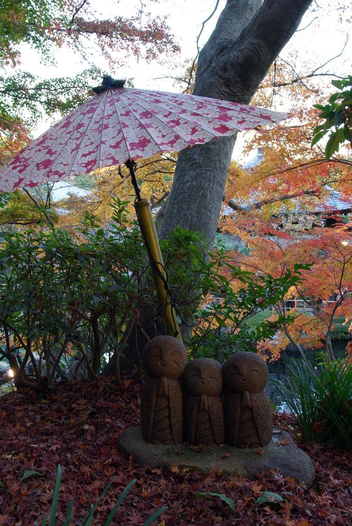 秋の日よけ