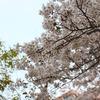 Spring*