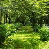 道のある風景 草道