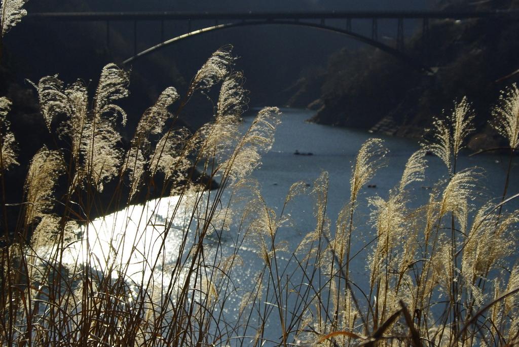 合角ダム すすきと橋