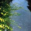散る花・咲く花