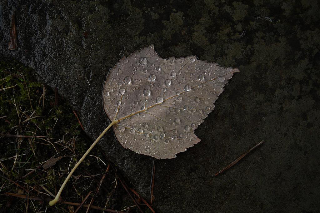 秋雨のしずく